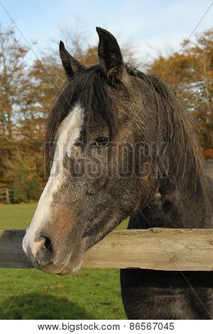 Pretty young horse portrait
