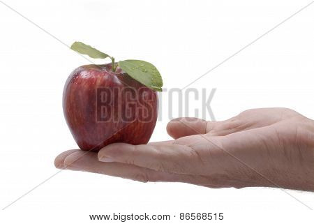 Red Apple Male Hand