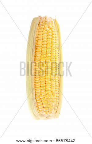 Sweetcorn On White Background