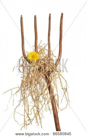Pitch fork loaded with straw and a single yellow daisy