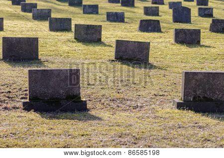 Graveyard Scene Honoring War Veterans