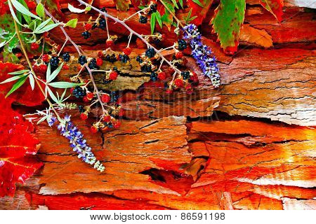A Digitally Constructed Painting Of Colorful Autumn Leaves And Pods Arranged On Stripped Bark.