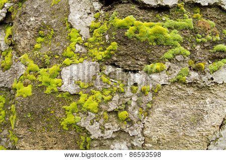 stone limestone overgrown with moss closeup