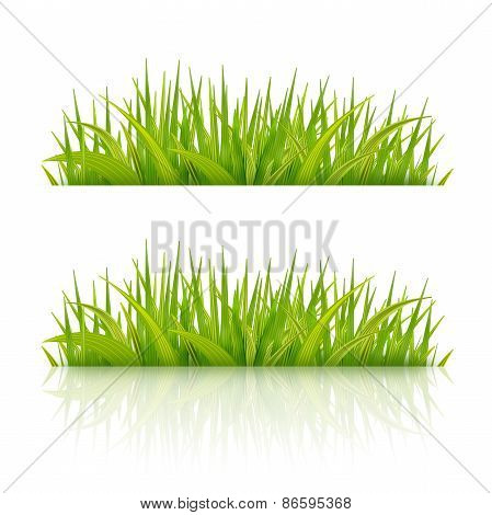 Green Grass With Reflection On White