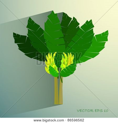 Ecological Concept, A Beautiful Tropical Banana Tree with Bananas