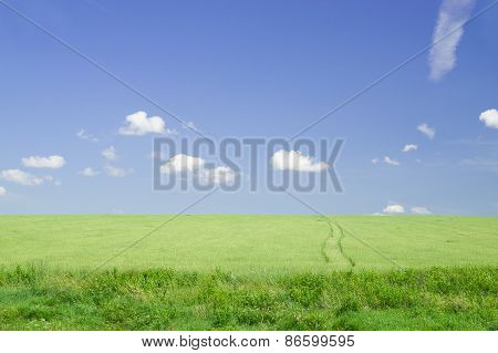 Green Field In The Summer In Sunny Weather