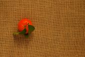 pic of satsuma  - Juicy Orange Clementine with Leaves on Sack Cloth Hessian - JPG