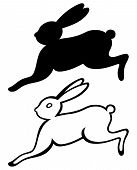 pic of hare  - Running hare - JPG