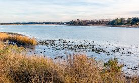 pic of inlet  - Natural oyster bed as seen at low tide in the Lynhaven Inlet off the Chesapeake Bay in Virginia Beach Va - JPG