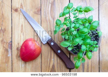 Basil Plant Knife And Tomato On Rustic Wood