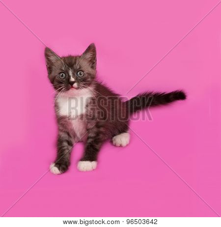 Siberian Fluffy Tabby Kitten Sitting On Pink