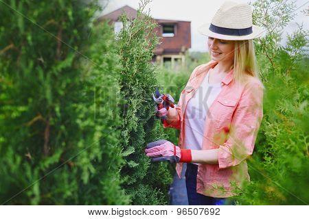 Female gardener taking care of thuja