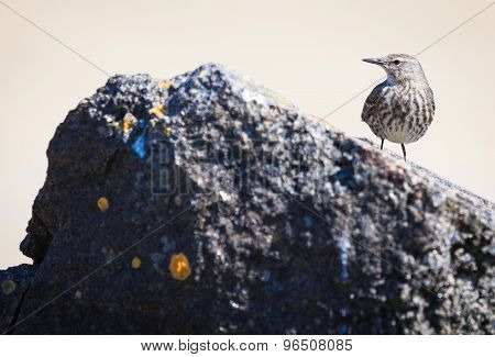 Bird Sitting  On Stone At A Beach In Brittany