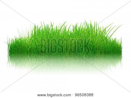 3D render of a patch of grass with reflection