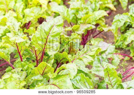 Beautiful Ecologic Organic Garden