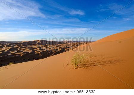 view of Erg Chebbi Dunes in Morocco-  Sahara Desert - during sand storm