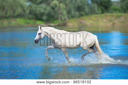 Whit Horse