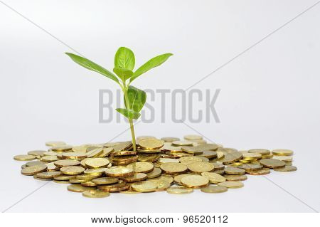 Plant And Gold Coins - Financial Concept