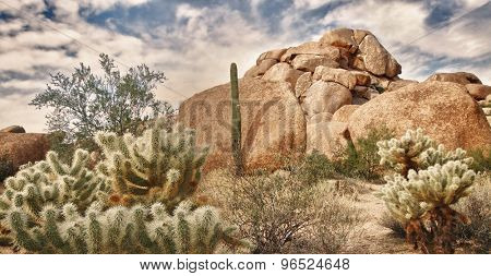 Desert South West Landscape