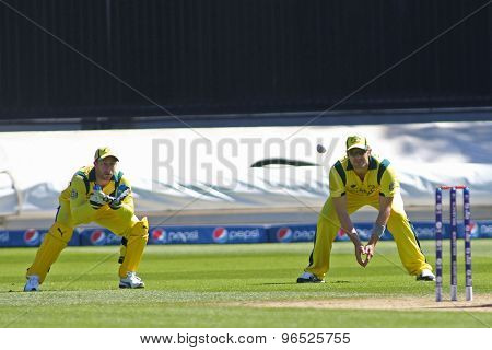 CARDIFF, WALES - June 04 2013: Australia's Matthew Wade (wk) and Shane Watson during the ICC Champions Trophy warm up match between India and Australia at the Cardiff Wales Stadium