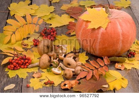 Autumn Background With Pumpkin, Mushrooms, Rowanberry And Maple Leaf On Old Wooden Table