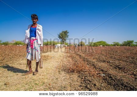 GODWAR REGION, INDIA - 14 FEBRUARY 2015: Young shepherd from Rabari tribe with no turban stands in field with cattle. Rabari are an Indian community in the state of Gujarat.