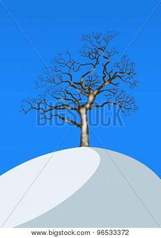 Winter Landscape With Single Oak Tree