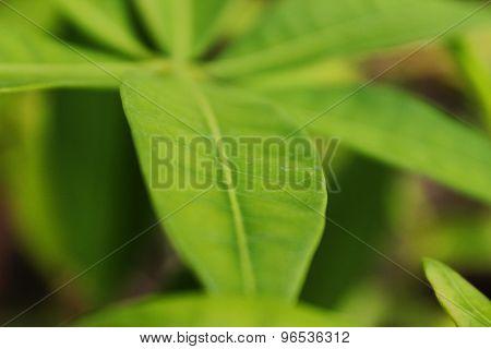 Amazing Leaf Background
