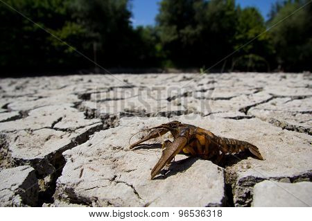 Drought - River Dried Up With Died Crab- Global Warming