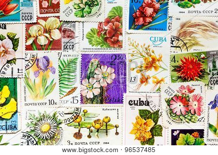 Stamp printed in USSR shows flower