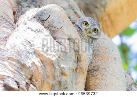Owl perched on a tree hole
