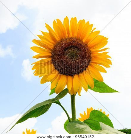 Bright dazzling sunlight flower