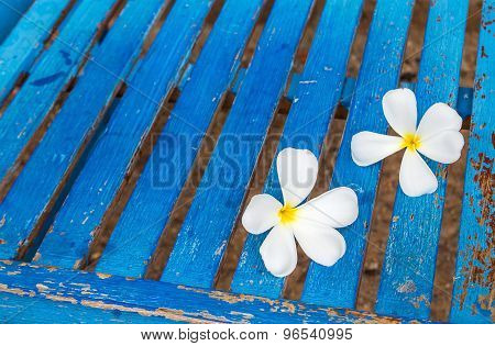 Frangipani Flower On A Blue Chair