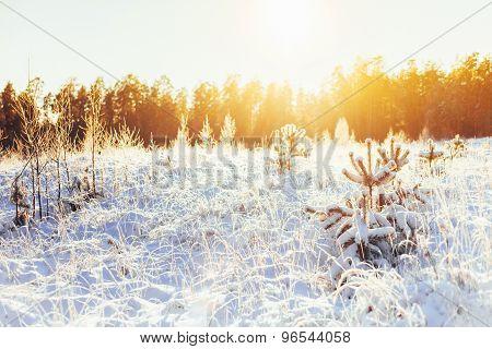 Winter Forest Landscape