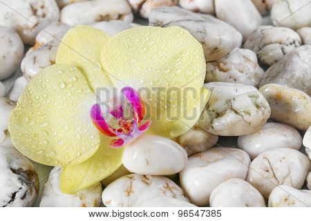 Yellow orchid on pebbles background.