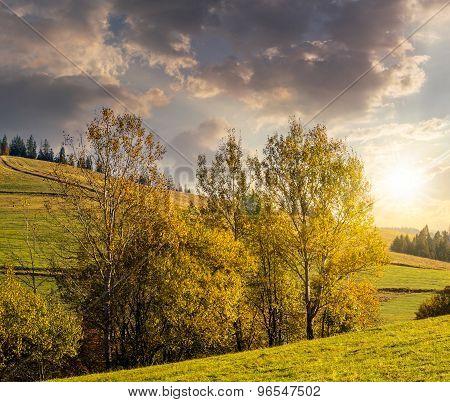 Few Trees On Hillside Glade At Sunset