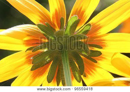 Under The Sun(flower)