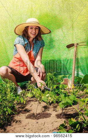 Woman With Gardening Tool Working In Greenhouse
