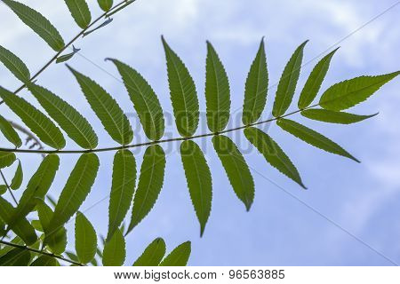 Plant Pattern And Blue Sky.