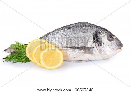 Fresh dorado fish with dill and lemon isolated on white