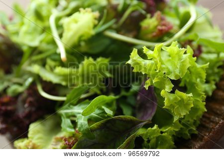 Fresh mixed green salad on plate close up