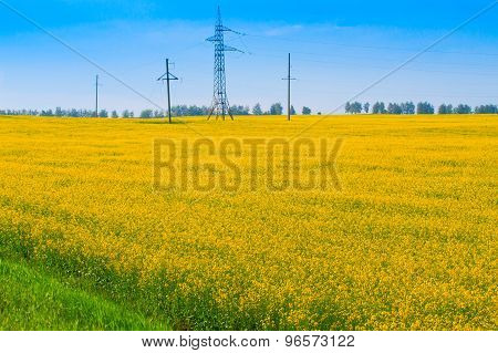 Power Line Among The Fields Of Rapeseed