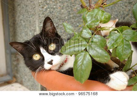 Cat In A Flower Pot