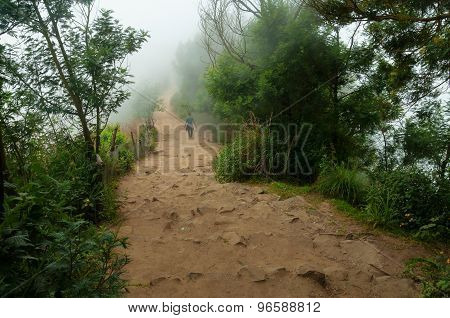 Road In Fog At The Top Station In Munnar