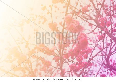 Abstract of cherry blossom