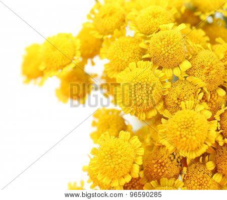Beautiful small wild flowers close up