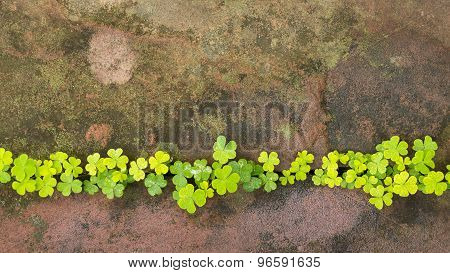Stone flooring with weeds as background