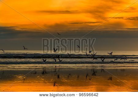 Sea Birds Lift Off