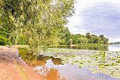 stock photo of willow  - Willows Typha Latifolia and Nuphar Lutea growing in the Dnieper river in Kiev under a cloudy sky - JPG