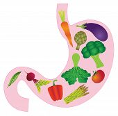 stock photo of human stomach  - Human Stomach Anatomy with Carrot Eggplant Beet Bell Peppers Asparagus Artichoke Peas Tomato Green Vegetables Color Vector Illustration - JPG